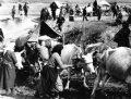Ethnischen Säuberungen: Genozid oder Flucht, Vertreibung, Deportation und Zwangsaussiedlung?