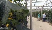 Spanien: Sklavenarbeit für unser billiges Gemüse
